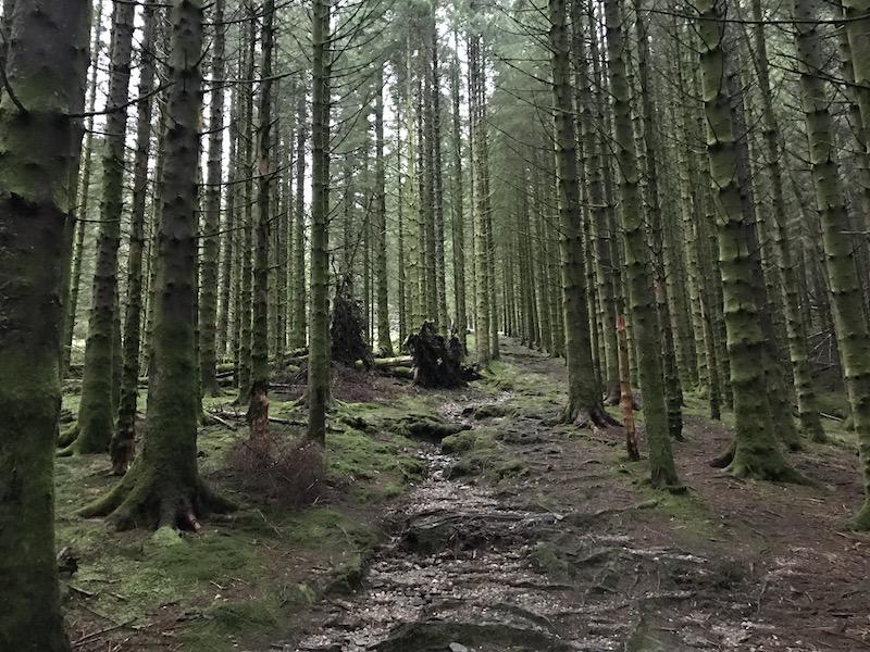 Fjellsiden - bilde av moseskogen i Isdalen